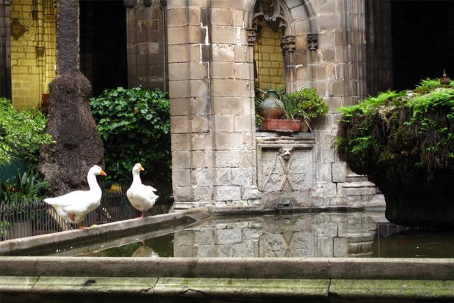 The geese by the cathedral fountain