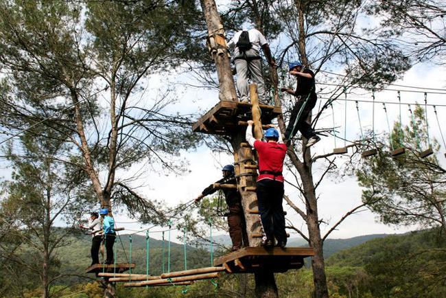 Activ Natura Tree game