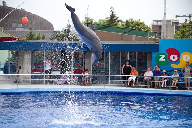 Esibizione dei delfini allo Zoo di Barcellona